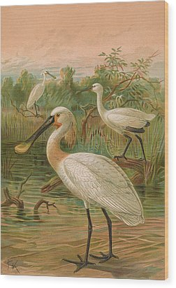 Eurasian Spoonbill Wood Print by Rob Dreyer