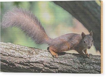 Wood Print featuring the photograph Euroasian Red Squirrel - Sciurus Vulgaris by Jivko Nakev