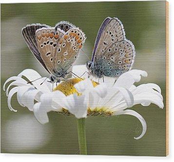 European Common Blue Butterflies Wood Print
