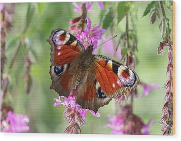 Wood Print featuring the photograph European Peacock Butterfly - Nymphalis Io by Jivko Nakev