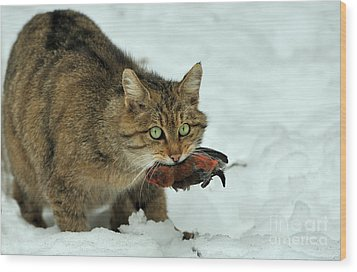 European Wildcat Wood Print by Reiner Bernhardt