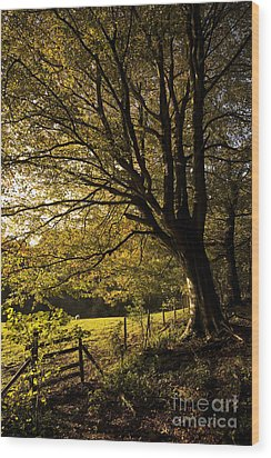 Evening Beech Wood Print by Anne Gilbert