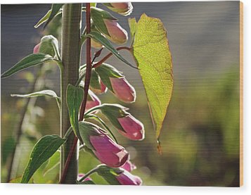 Wood Print featuring the photograph Evening Foxglove by Adria Trail