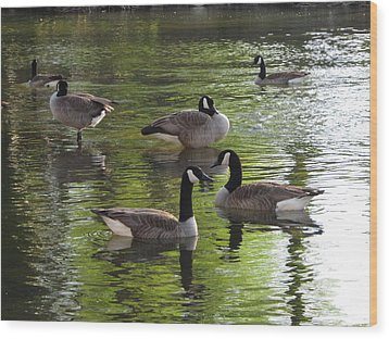 Evening Geese Gathering Wood Print