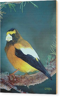 Evening Grosbeak Wood Print by Jean Yves Crispo