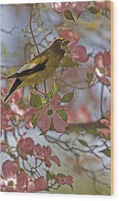 Evening Grosbeak Wood Print by Judi Baker