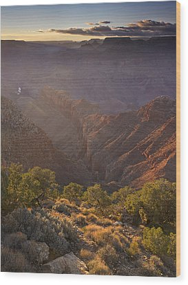 Evening Light At The Grand Canyon Wood Print