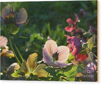Wood Print featuring the photograph Evening Light by Liz  Alderdice