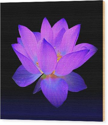 Evening Purple Lotus  Wood Print