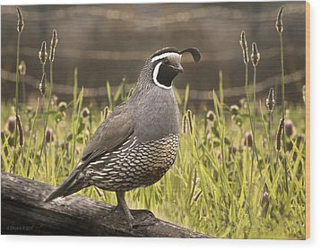 Evening Quail Wood Print by Melisa Meyers
