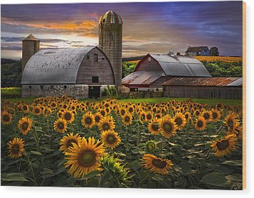 Evening Sunflowers Wood Print by Debra and Dave Vanderlaan