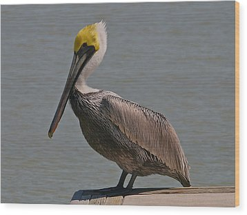 Everglades Brown Pelican Wood Print