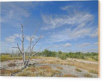 Everglades Coastal Prairies Wood Print by Rudy Umans