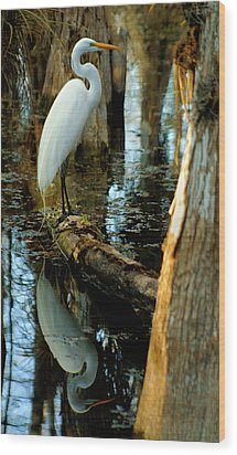 Everglades Egret Wood Print