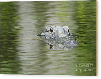 Everglades 'gator Wood Print by Martha Marks
