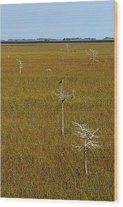 Everglades View Wood Print