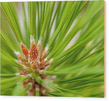 Evergreen 001 Wood Print by Todd Soderstrom