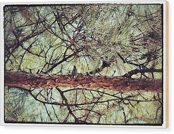 Wood Print featuring the photograph Evergreen Bird by Tara Potts