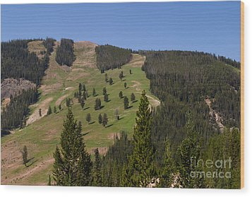 Wood Print featuring the photograph Evergreen Hillside by Charles Kozierok