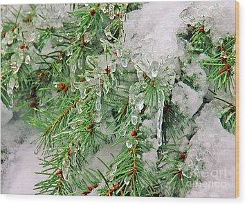 Evergreen Icicles I Wood Print by Chuck Flewelling