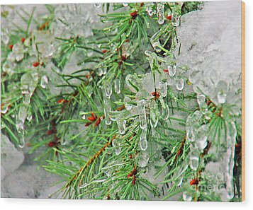 Evergreen Icicles II Wood Print by Chuck Flewelling