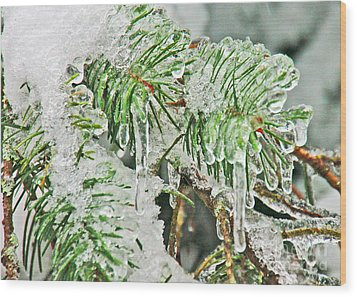 Evergreen Icicles IIi Wood Print by Chuck Flewelling