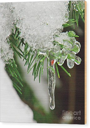 Evergreen Icicles Iv Wood Print by Chuck Flewelling