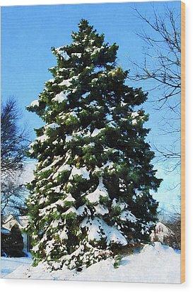 Evergreen In Winter Wood Print by Susan Savad