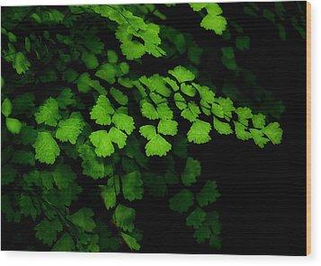 Evergreen Wood Print by Lorenzo Cassina