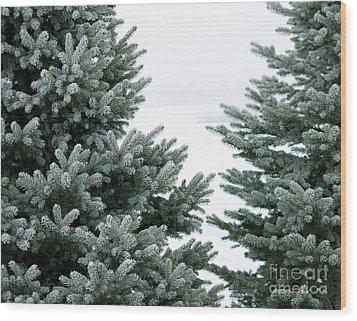 Evergreens Wood Print