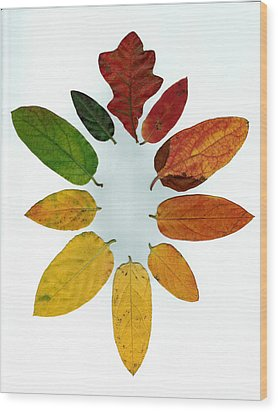 Wood Print featuring the digital art Evolution Of Autumn Wh by Pete Trenholm