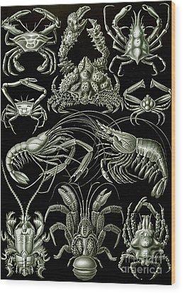 Examples Of Decapoda Kunstformen Der Natur Wood Print by Ernst Haeckel