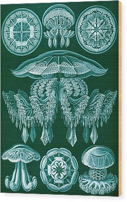 Examples Of Discomedusae Wood Print by Ernst Haeckel
