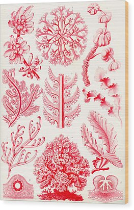 Examples Of Florideae From Kunstformen Der Natur Wood Print by Ernst Haeckel