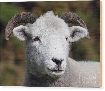 Exmoor Horn Sheep Wood Print by Terri Waters