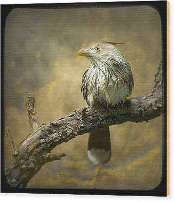 Exotic Bird - Guira Cuckoo Bird Wood Print
