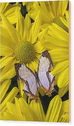Exotic Butterfly Wood Print by Garry Gay