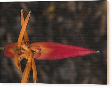 Wood Print featuring the photograph Exotic Heliconia by Steven Sparks