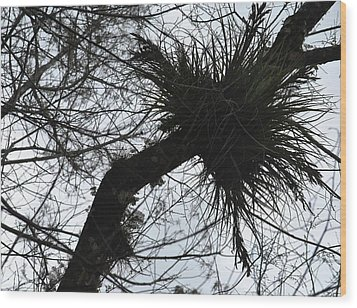 Exploding Branch Wood Print
