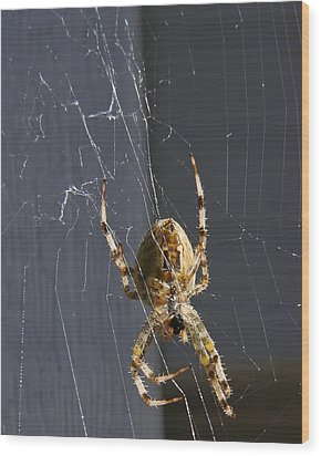 Wood Print featuring the photograph Exploring The Web by Rhonda McDougall
