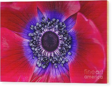 Extreme Macro Of A Red Anemone Poppy Wood Print by Oscar Gutierrez