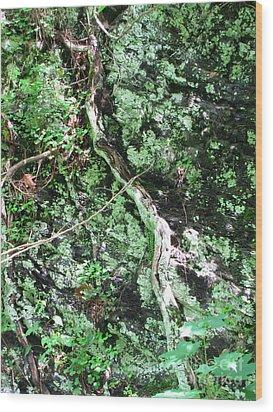 Eye Of Root Wood Print