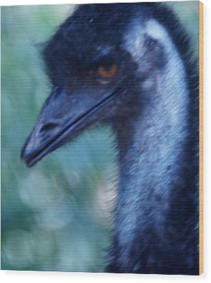 Eye Of The Emu Wood Print by DerekTXFactor Creative