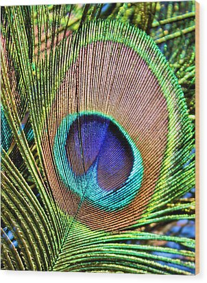 Eye Of The Feather Wood Print