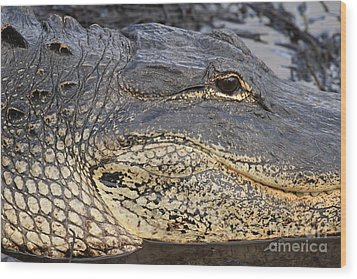 Eye Of The Gator Wood Print by Adam Jewell