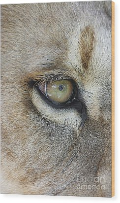 Wood Print featuring the photograph Eye Of The Lion by Judy Whitton