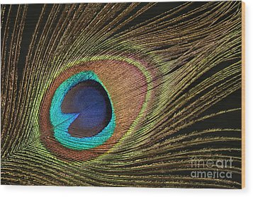 Eye Of The Peacock #5 Wood Print