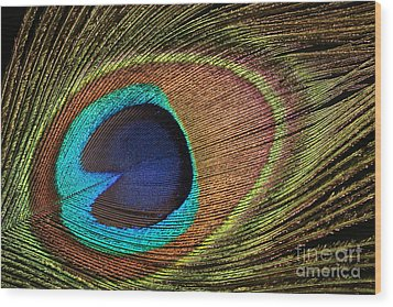 Eye Of The Peacock Wood Print by Judy Whitton