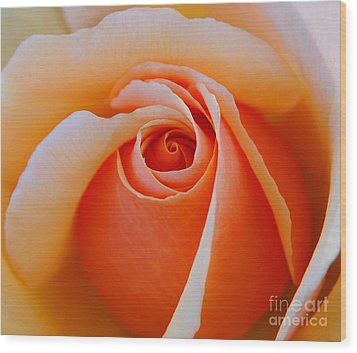 Eye Of The Rose Wood Print