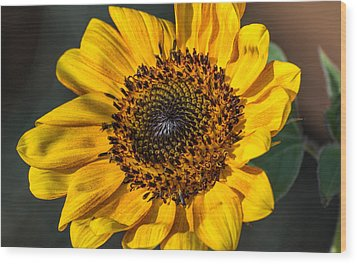 Eye Of The Sun Wood Print by Michael Moriarty
